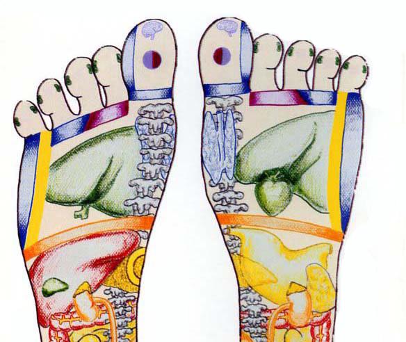 Diagram of Foot, reflexology
